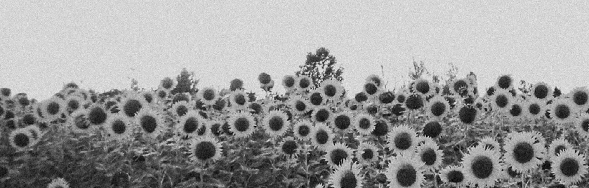 Stream: Jesu / Sun Kil Moon
